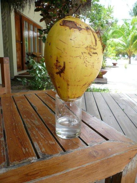 Процесс доения кокоса