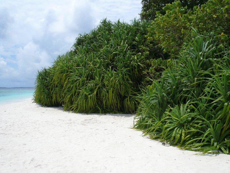 Прочая экваториальная растительность